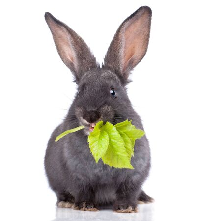 a rabbit,isolated on white photo