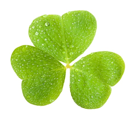 a clover, isolated on green Stock Photo - 12936935