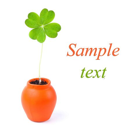 a clover isolated on white with easy remove text photo