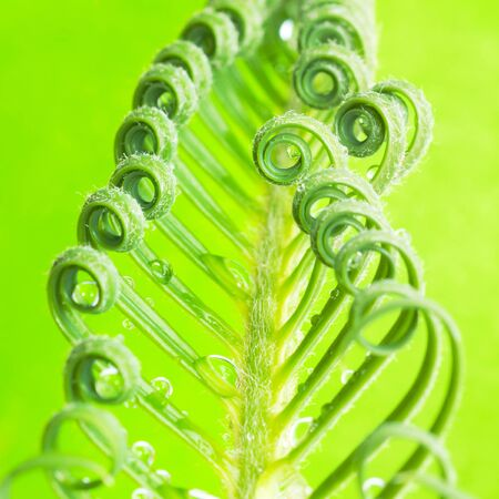 a tendril, macro of plant photo