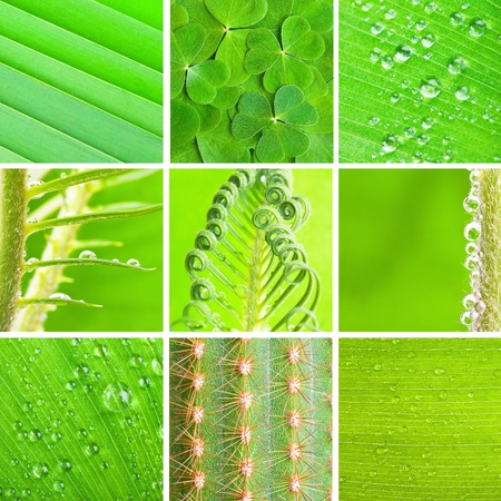 a set of green plant texture Stock Photo - 13032528
