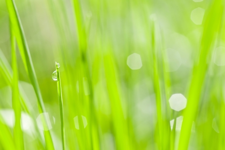 abstract green background from grass and drops
