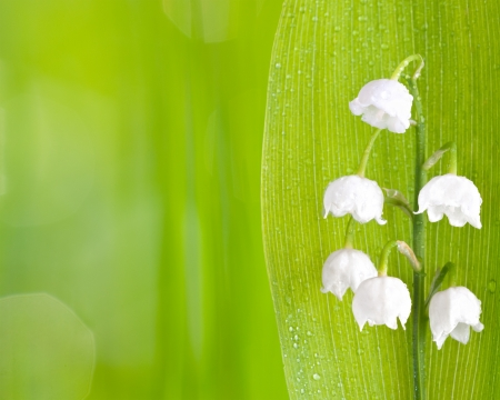 lily of the valley, on green background