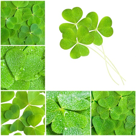a set of clovers texture photo