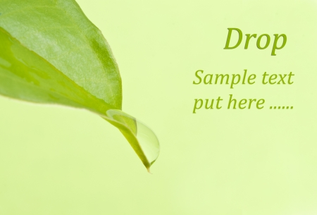 a green plant with drop Stock Photo - 13706911