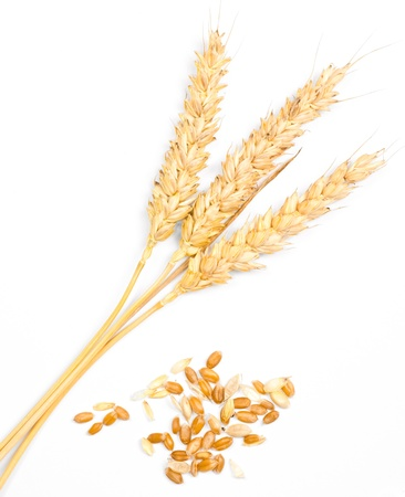 ear of wheat on white photo