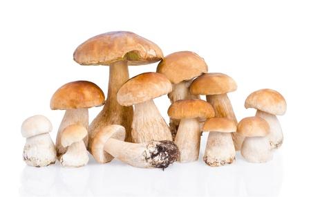 hongo: grupo de hongos boletus sobre fondo blanco
