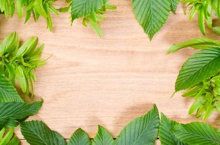 hornbeam: natural oak wood texture and hornbeam green leaves