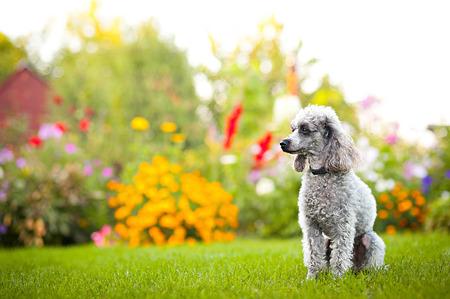 little dog on tne grass