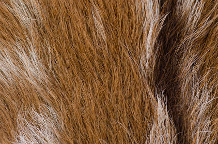 cow hide: animal nature fur