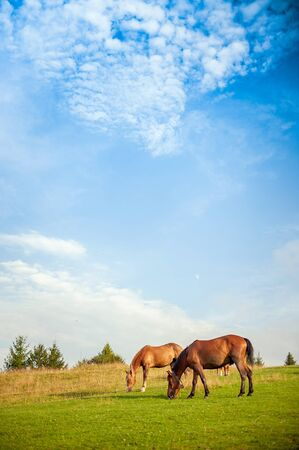 horse grazing in a pasture photo