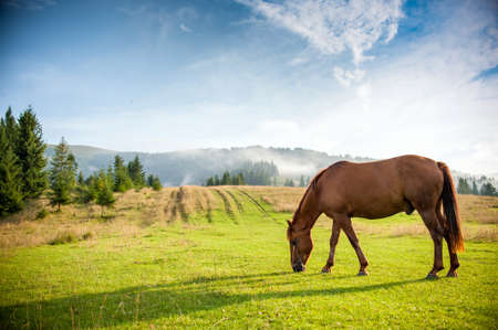 horse grazing in a pasture