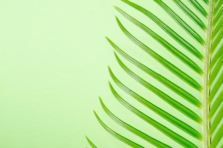 cycas: a tendril, macro of plant cycas Stock Photo