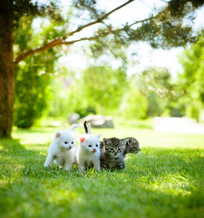 kitten: Four little kitten walking on the green grass