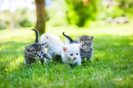 kitten: group of little kitten in a basket on the grass