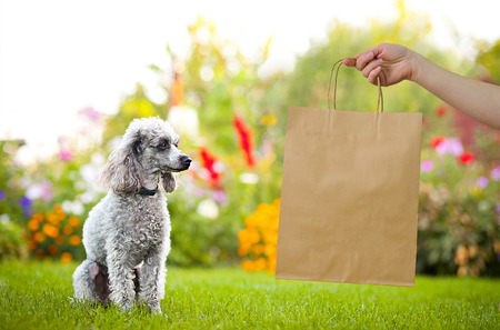 white poodle: brown kraft bag with pretty poodles on green garden with flowers on background