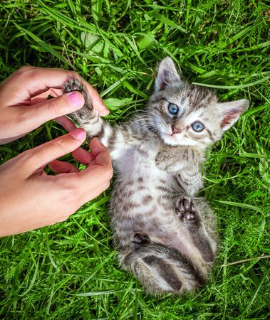 kitten: Hand playing with a little kitten on the green grass Stock Photo