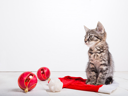 flor: Grey small Christmas kitten sitting on a flor with Christmas red decorations
