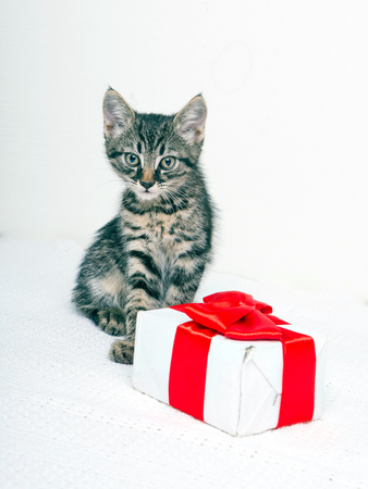 christmas pussy: Cute kitten with present box on white background