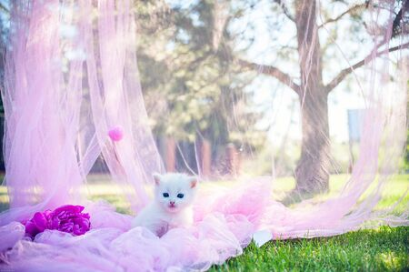 kitten: white two kitten on the pink background with flowers
