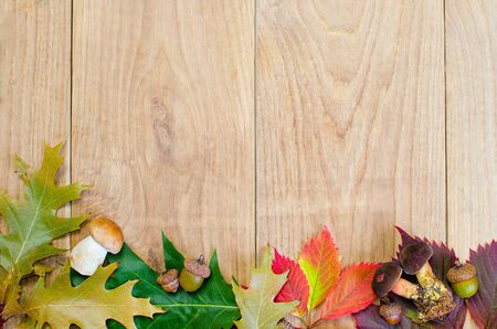 acorn tree: a autumn frame with mushroom and leaves