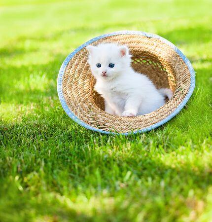 Little white kitten in a hat on the grass in sunny day, Reklamní fotografie