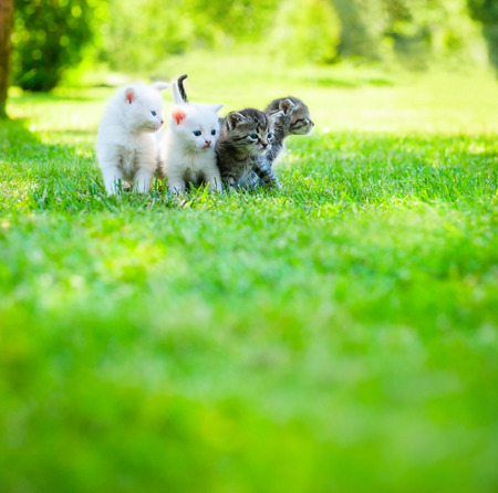 puppy and kitten: Four little kitten walking on the green grass