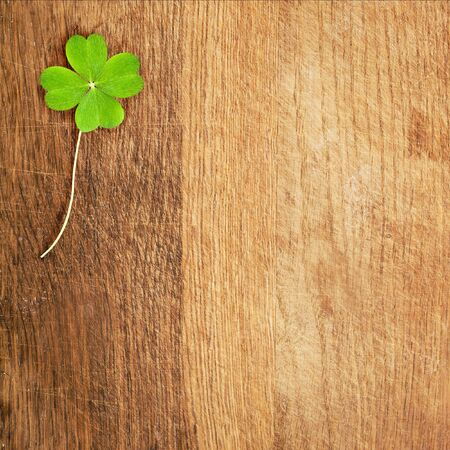 four leafed: a green clover on wooden desk, square