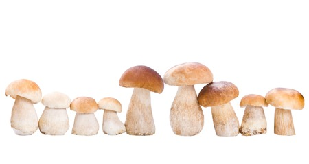 a group of mushroom, isolated on white