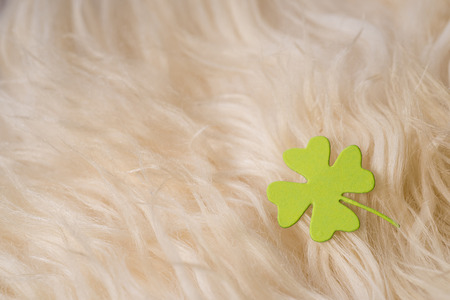 shamrock, paper green clover symbol of a St Patrick day on sheeps clothing Stock Photo