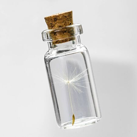 safeguard: dandelion seeds in small glass bottles with gray background,  safeguard concept