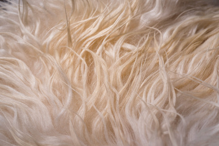 carpet clean: A white warm natural fur texture background