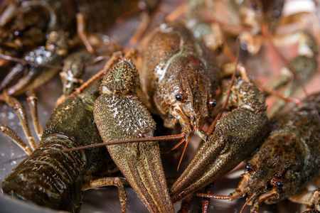 alive crayfish on metal plate in fish market Stock Photo
