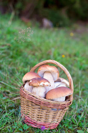 a mushrooms in basket o the meadow