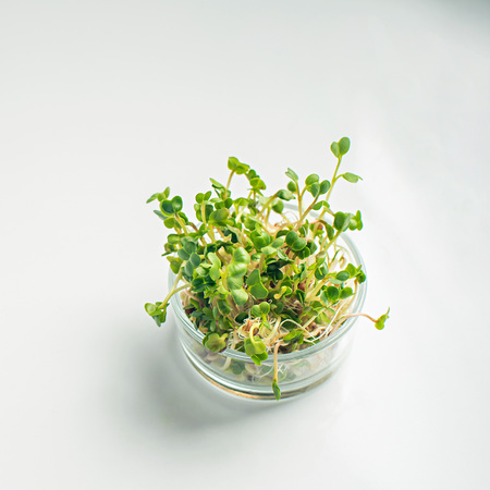 micro greens in glass pot on a white background, blank space for text.