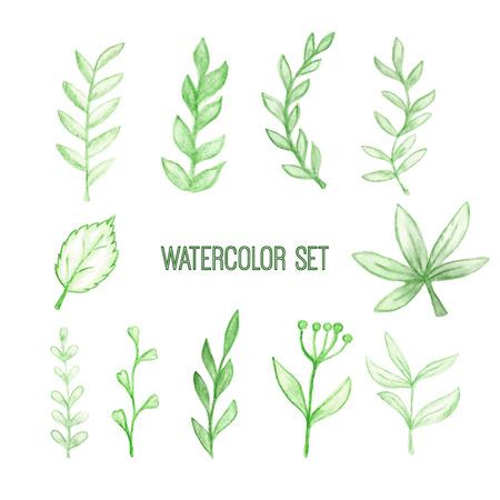 vector set of watercolor floral elements Illustration