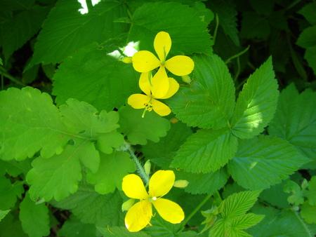 tore: Yellow flowers