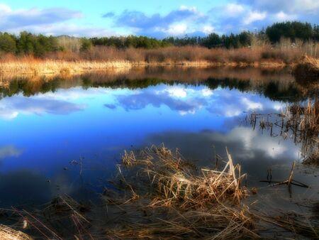 Fall colors on a bog