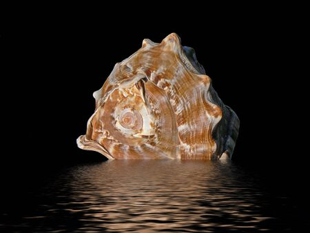 Tropical seashell on a black background reflecting in the water Stock Photo
