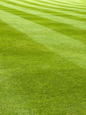Large lawn of a grass mowed in stripe pattern
