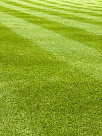 cut grass: Large lawn of a grass mowed in stripe pattern