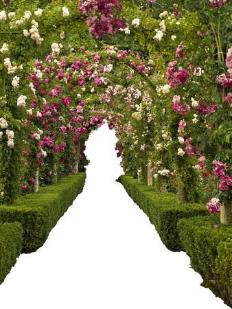 garden path: Passage ornate with roses forming multiple arcs, walkway and clearance isolated