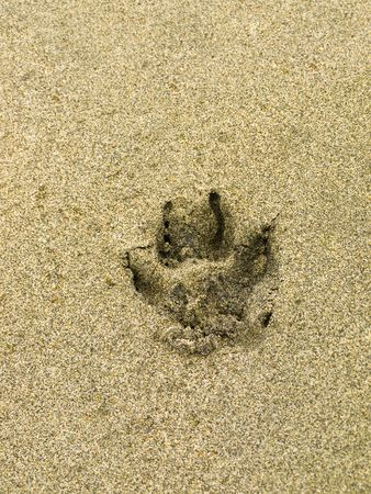 gritty: Dog paw print on a beach sand surface