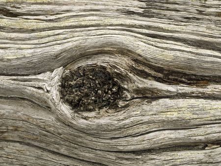 Detail of a driftwood log on a beach Stock Photo