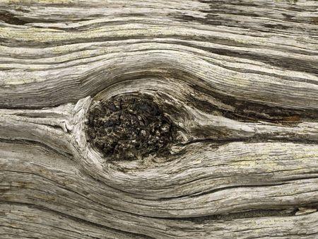 Detail of a driftwood log on a beach Imagens