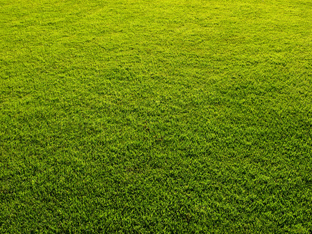 Mowed grass lawn forming green background Stock Photo