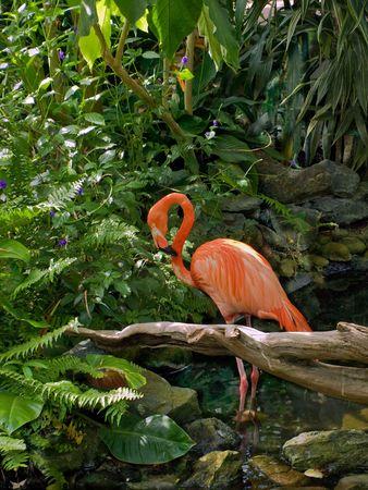 Flamingo in a water stream amidst lush greenery