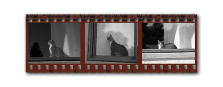 perforated: Snippet of a  B&W filmstrip with images of a cat sitting in a window