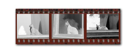 Snippet of a negative B&W filmstrip with images of a cat sitting in a window