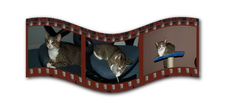 Snippet of a color filmstrip with amateur images of a cat 版權商用圖片 - 2216158
